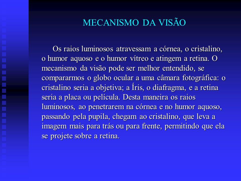 MECANISMO DA VISÃO