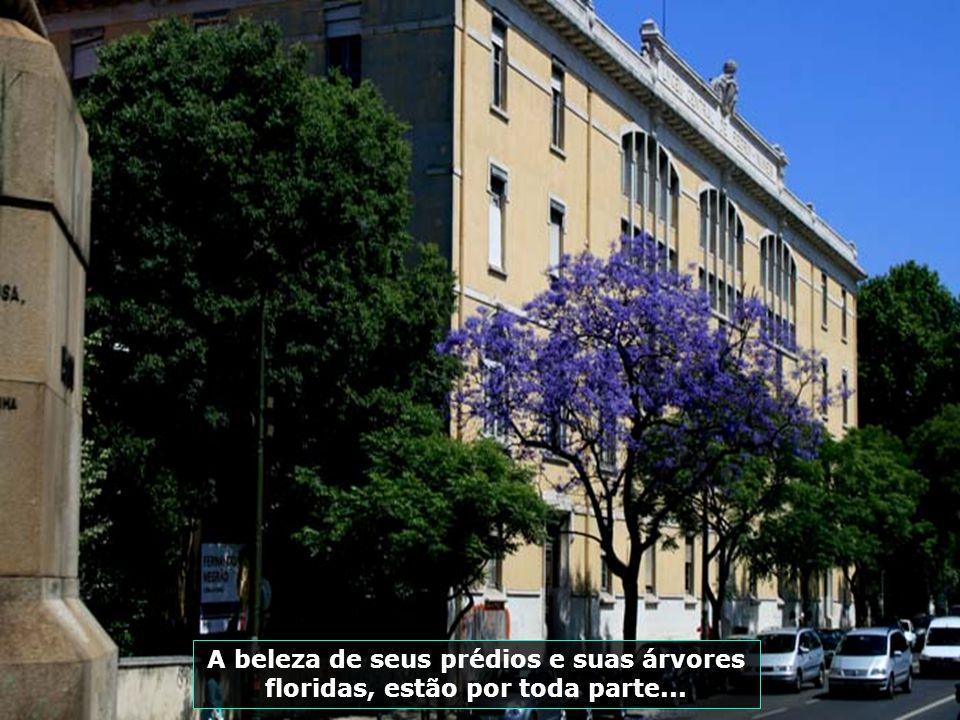 IMG_3341 - PORTUGAL - LISBOA - PRÉDIO E ÁRVORE FLORIDA-700