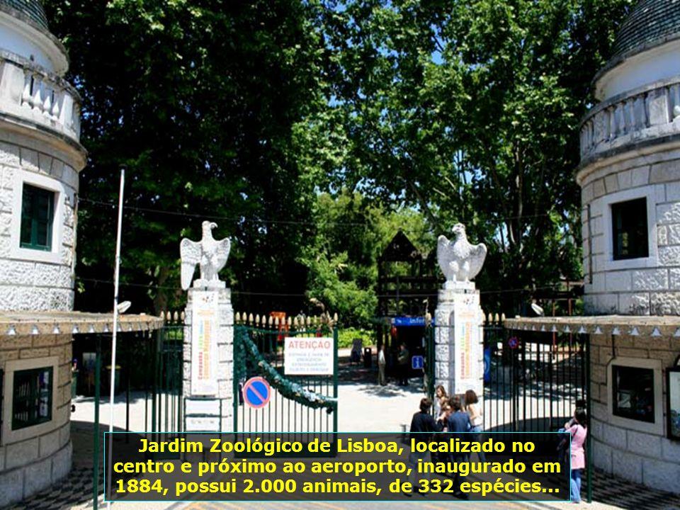 IMG_3397 - PORTUGAL - LISBOA - JARDIM ZOOLÓGICO-700