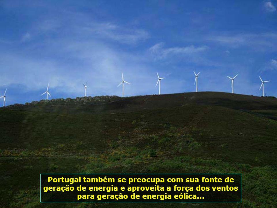 IMG_1704 - CATA VENTOS - ENERGIA EÓLICA-700