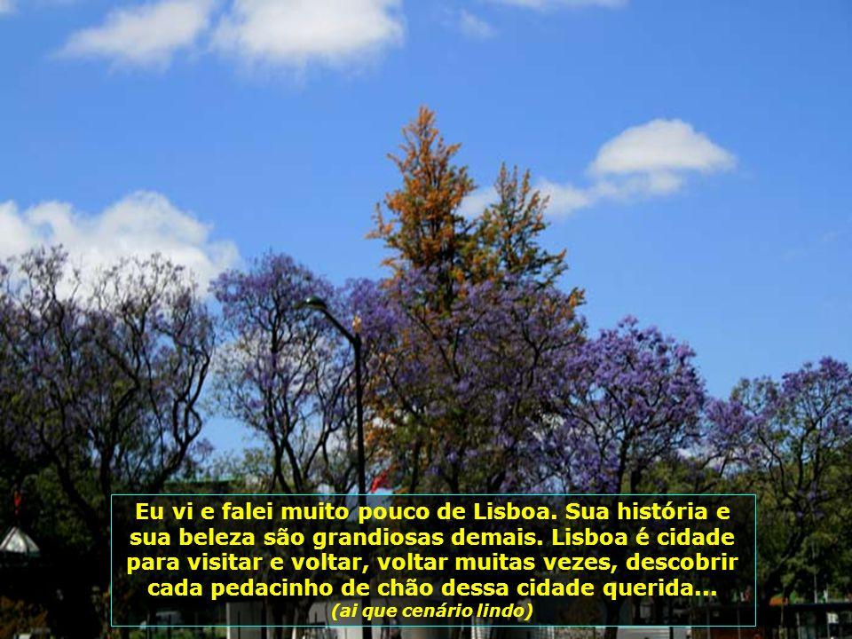 IMG_3422 - PORTUGAL - LISBOA - ÁRVORES FLORIDAS-700