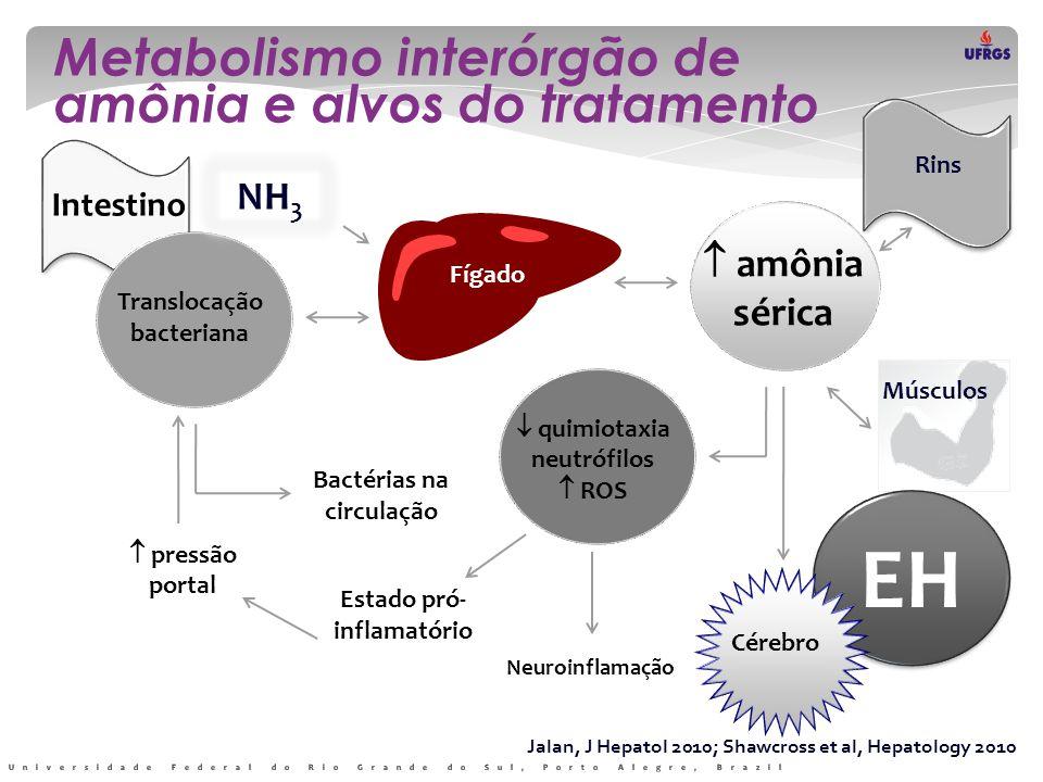 EH Metabolismo interórgão de amônia e alvos do tratamento NH3