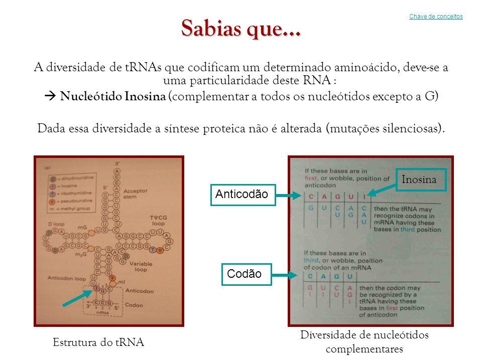 Chave de conceitos Sabias que… A diversidade de tRNAs que codificam um determinado aminoácido, deve-se a uma particularidade deste RNA :