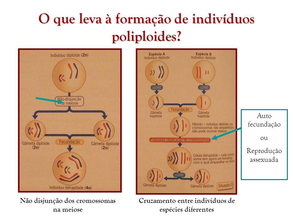 O que leva à formação de indivíduos poliploides