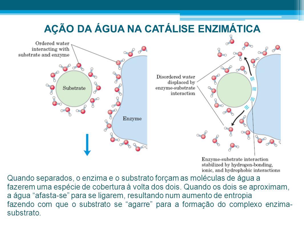 AÇÃO DA ÁGUA NA CATÁLISE ENZIMÁTICA