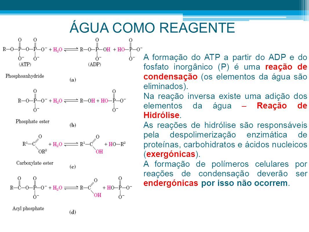 ÁGUA COMO REAGENTE A formação do ATP a partir do ADP e do fosfato inorgânico (P) é uma reação de condensação (os elementos da água são eliminados).
