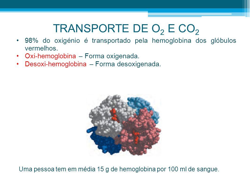 TRANSPORTE DE O2 E CO2 98% do oxigénio é transportado pela hemoglobina dos glóbulos vermelhos. Oxi-hemoglobina – Forma oxigenada.