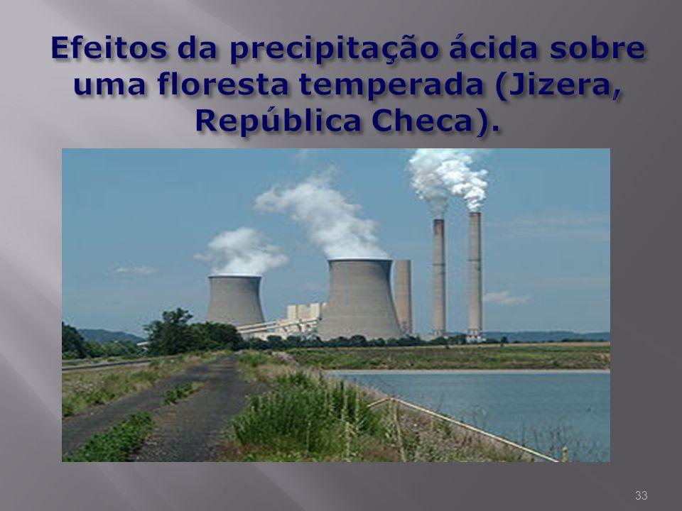 Efeitos da precipitação ácida sobre uma floresta temperada (Jizera, República Checa).