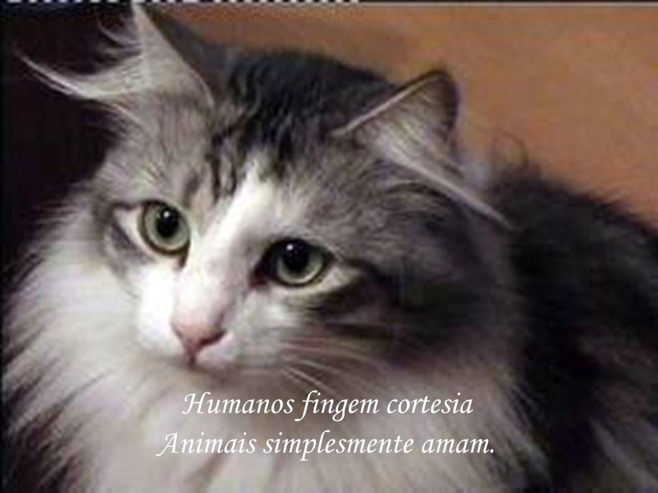 Humanos fingem cortesia Animais simplesmente amam.