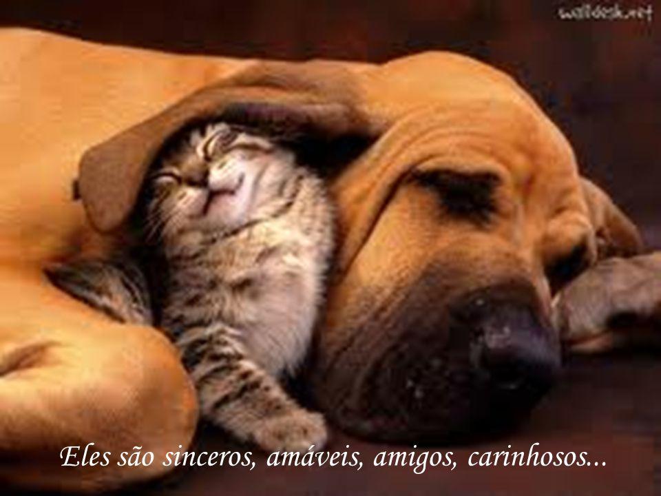 Eles são sinceros, amáveis, amigos, carinhosos...