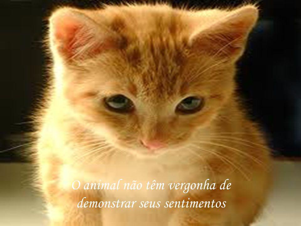 O animal não têm vergonha de demonstrar seus sentimentos