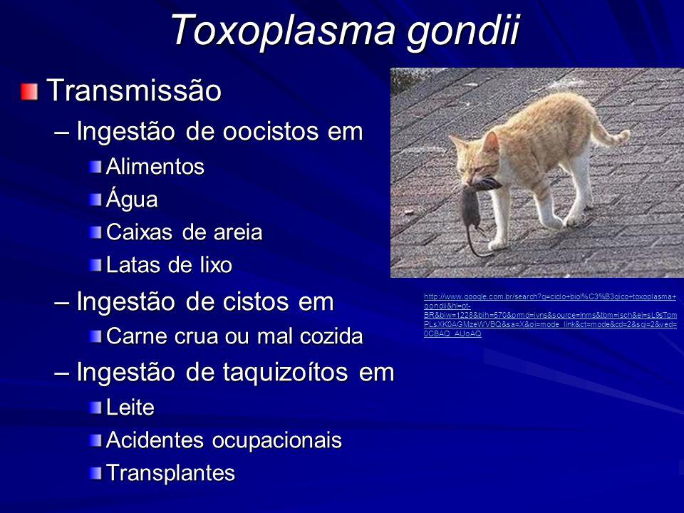 Toxoplasma gondii Transmissão Ingestão de oocistos em
