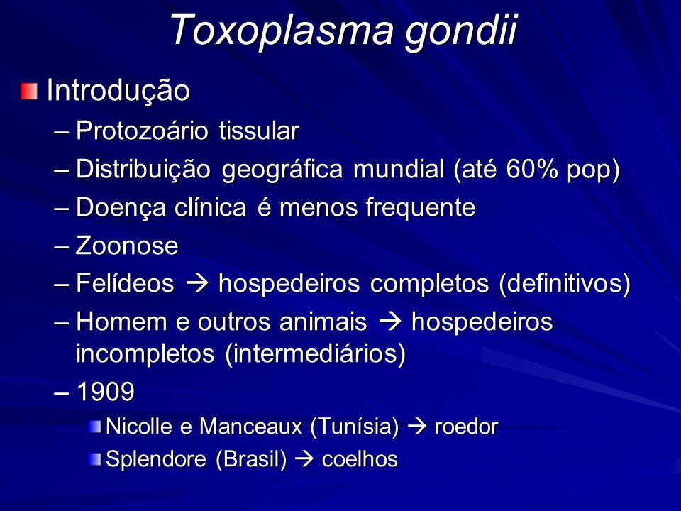 Toxoplasma gondii Introdução Protozoário tissular