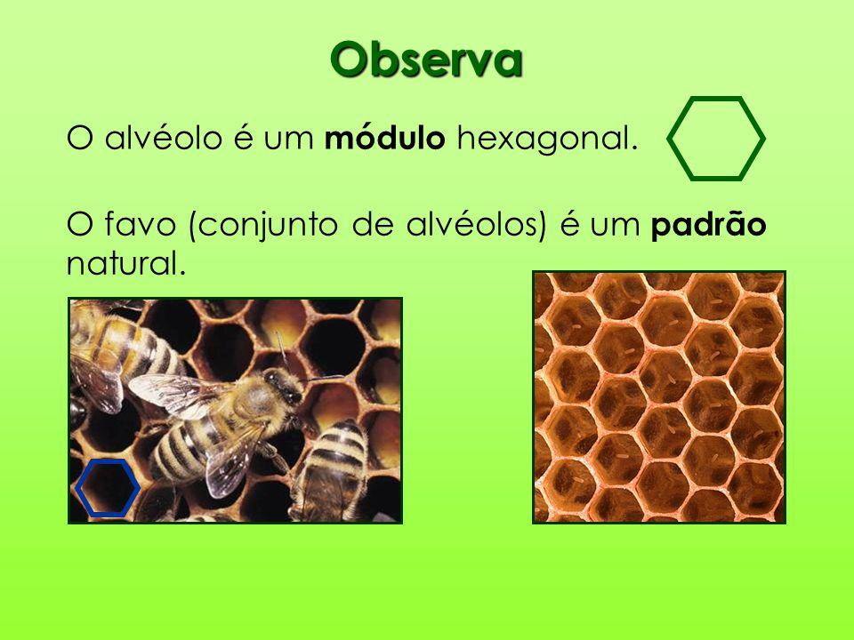 Observa O alvéolo é um módulo hexagonal.
