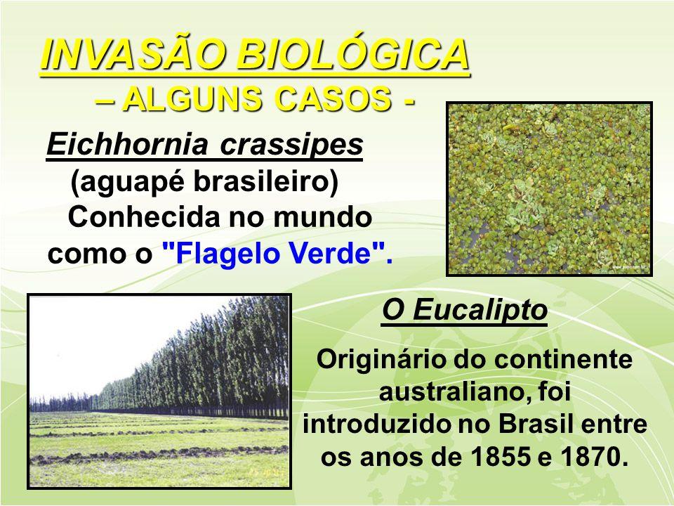 INVASÃO BIOLÓGICA – ALGUNS CASOS -