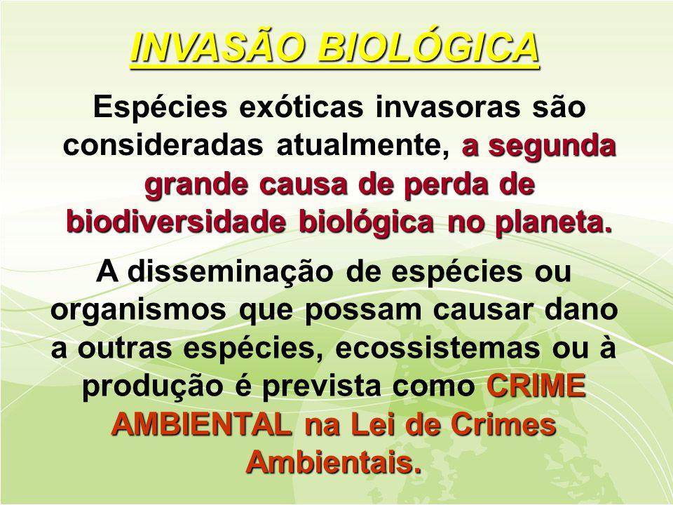INVASÃO BIOLÓGICA Espécies exóticas invasoras são consideradas atualmente, a segunda grande causa de perda de biodiversidade biológica no planeta.