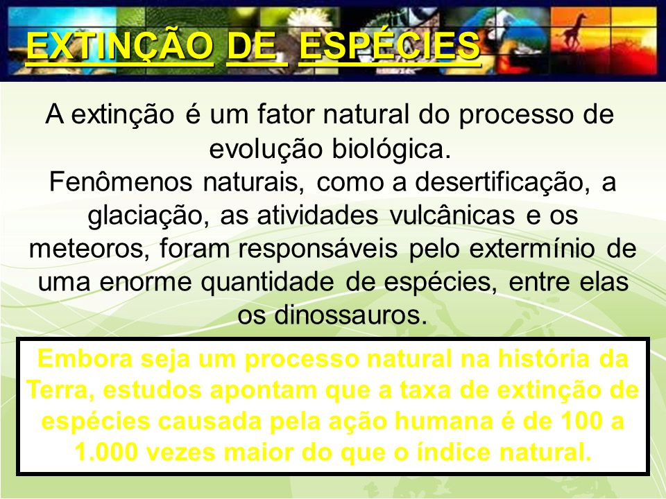 A extinção é um fator natural do processo de evolução biológica.