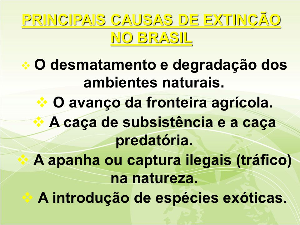 PRINCIPAIS CAUSAS DE EXTINÇÃO NO BRASIL
