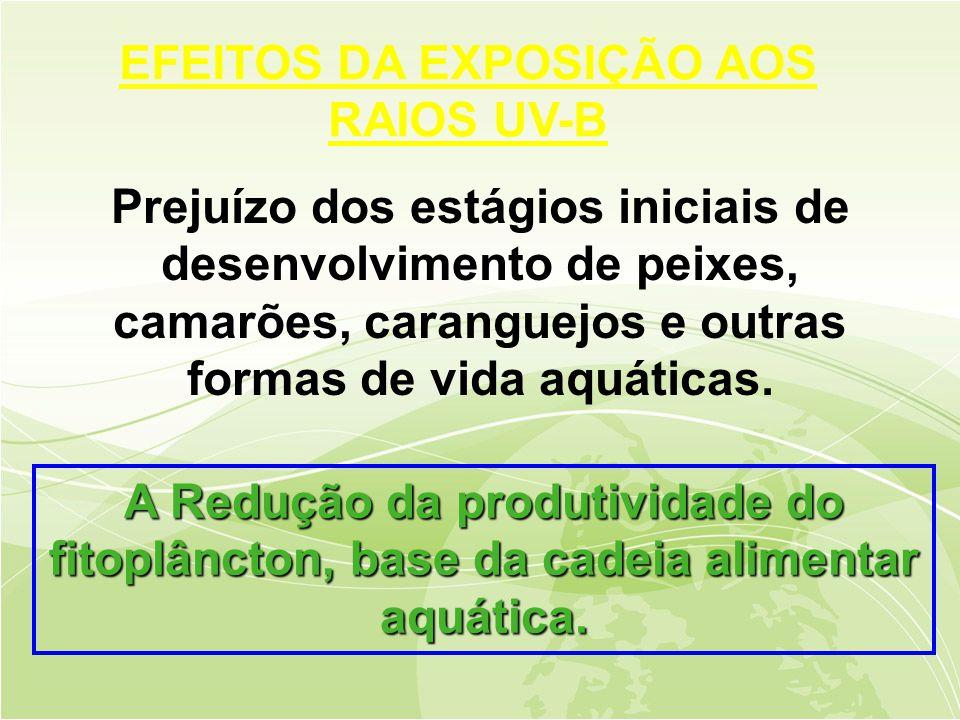EFEITOS DA EXPOSIÇÃO AOS RAIOS UV-B