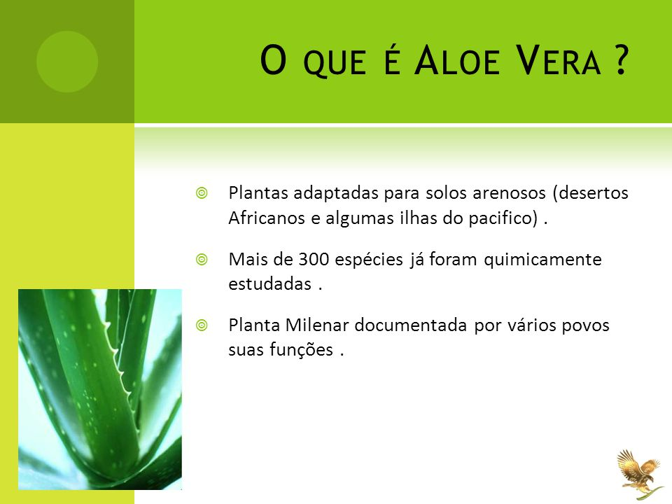 O que é Aloe Vera Plantas adaptadas para solos arenosos (desertos Africanos e algumas ilhas do pacifico) .
