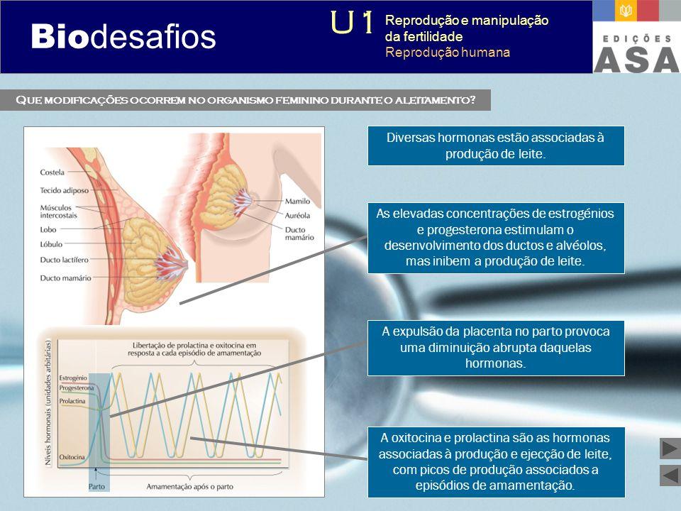 Que modificações ocorrem no organismo feminino durante o aleitamento