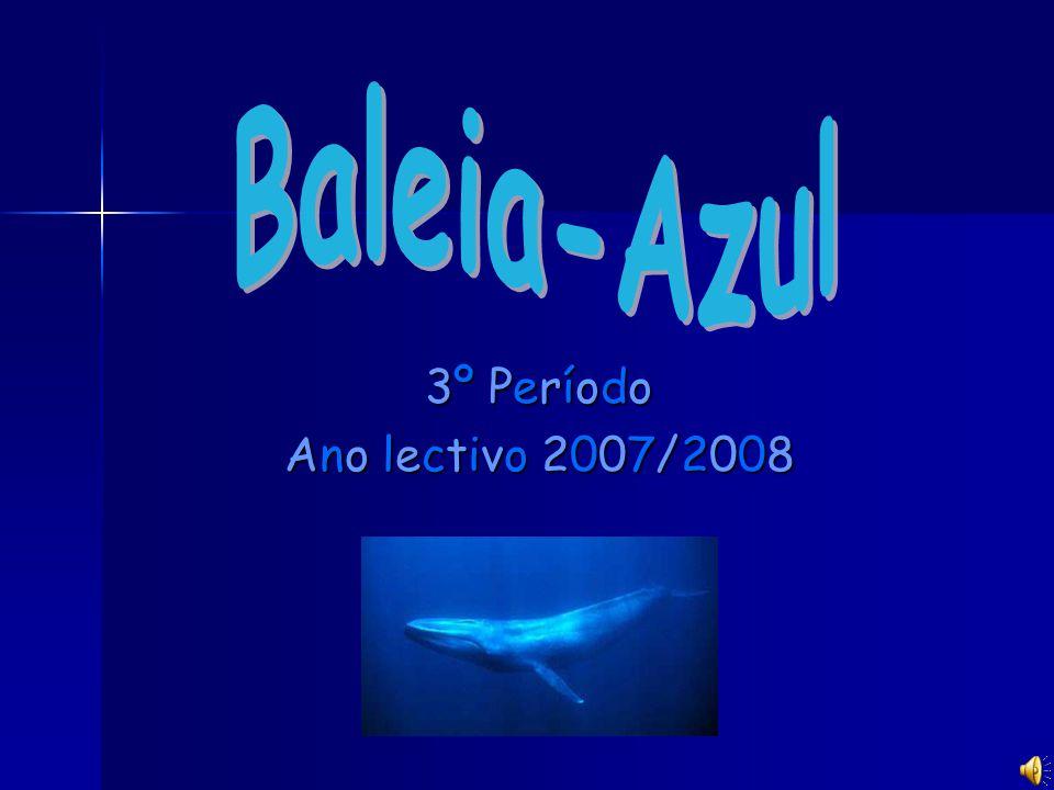 Baleia-Azul 3º Período Ano lectivo 2007/2008