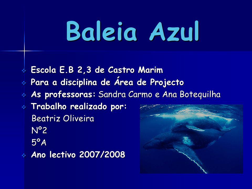 Baleia Azul Escola E.B 2,3 de Castro Marim
