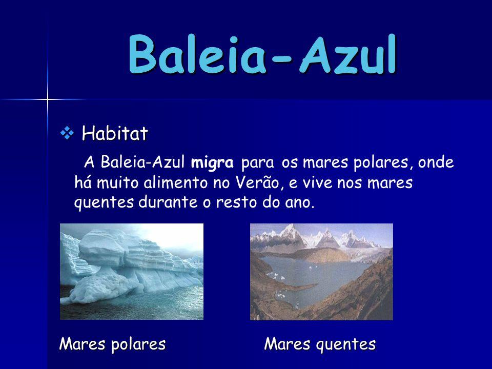 Baleia-Azul Habitat. A Baleia-Azul migra para os mares polares, onde há muito alimento no Verão, e vive nos mares quentes durante o resto do ano.