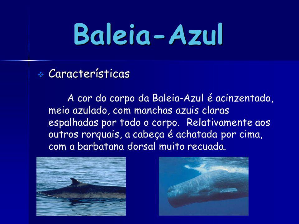 Baleia-Azul Características