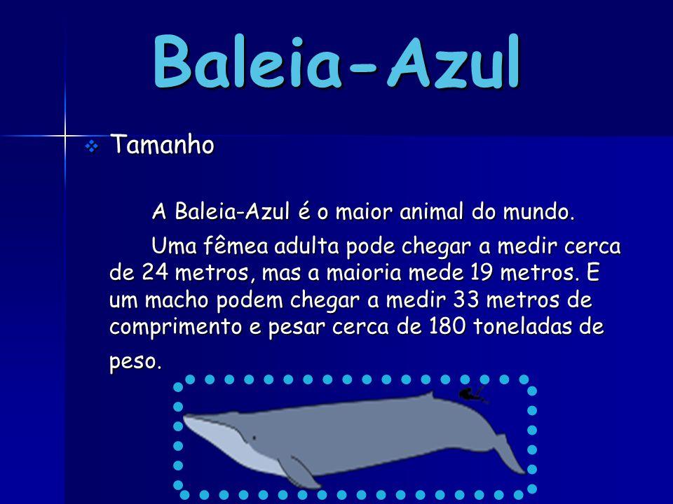 Baleia-Azul A Baleia-Azul é o maior animal do mundo. Tamanho