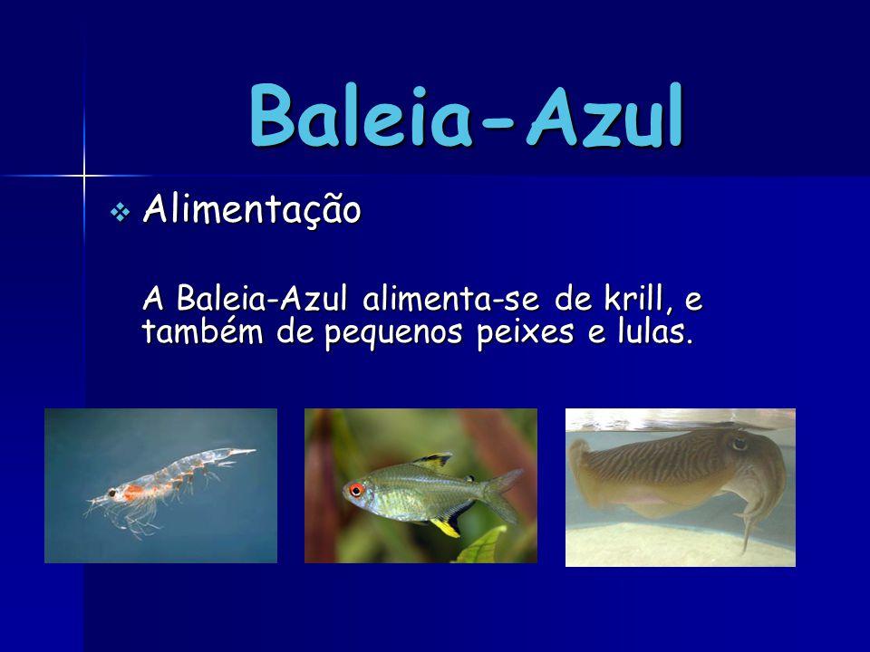 Baleia-Azul Alimentação