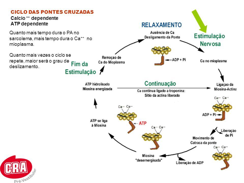 CICLO DAS PONTES CRUZADAS