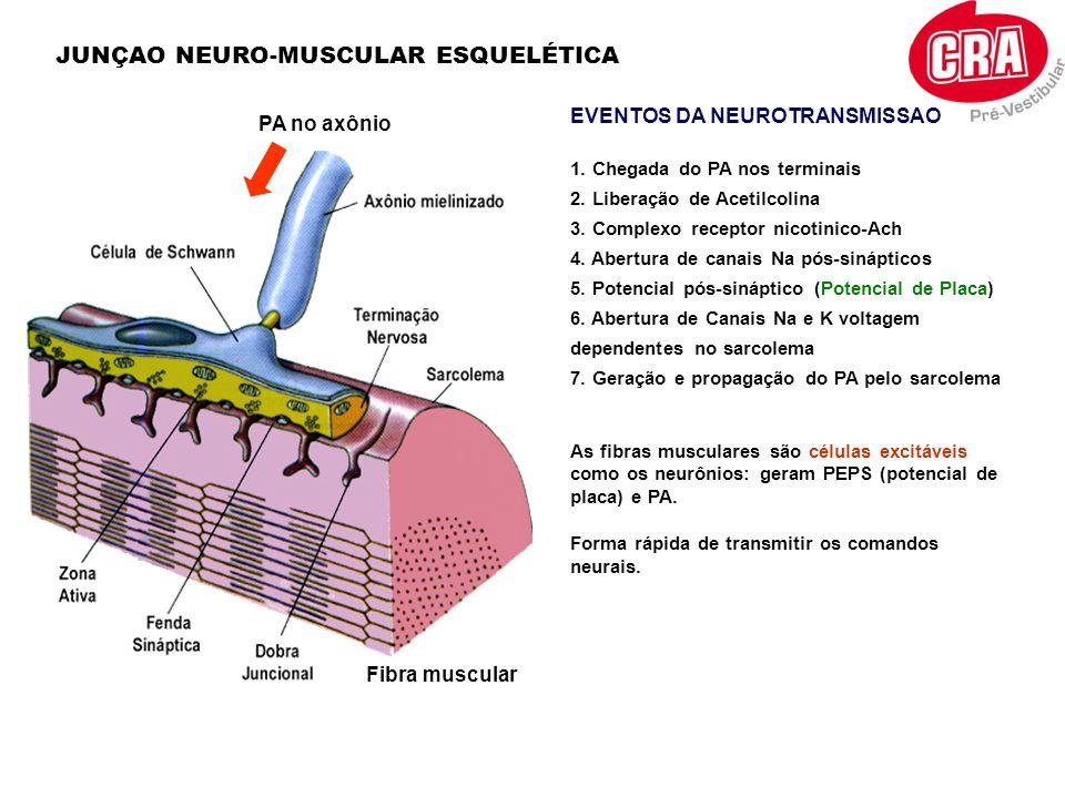 JUNÇAO NEURO-MUSCULAR ESQUELÉTICA