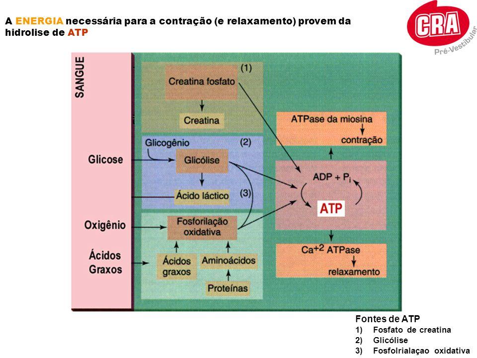 A ENERGIA necessária para a contração (e relaxamento) provem da hidrolise de ATP