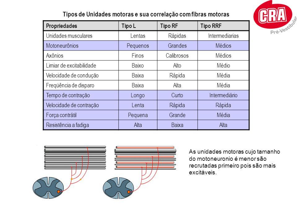 Tipos de Unidades motoras e sua correlação com fibras motoras