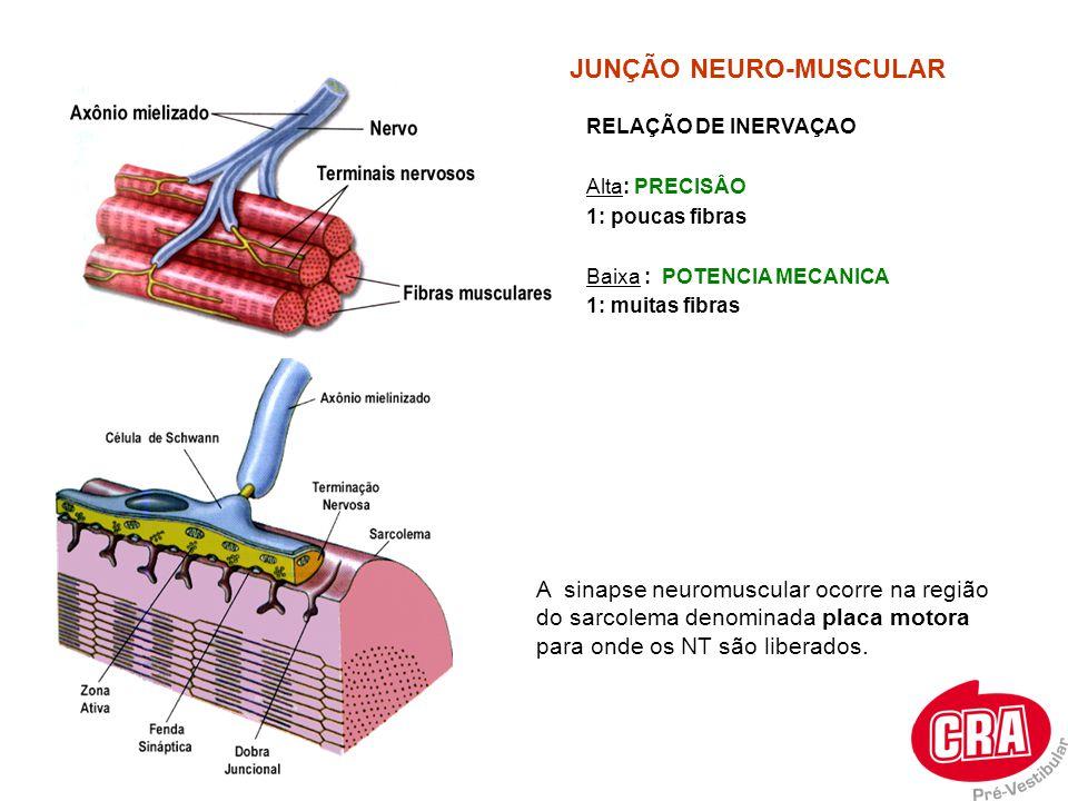 JUNÇÃO NEURO-MUSCULAR