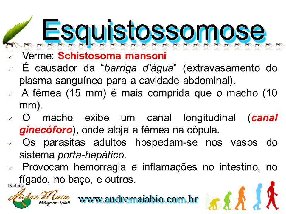 Esquistossomose Verme: Schistosoma mansoni