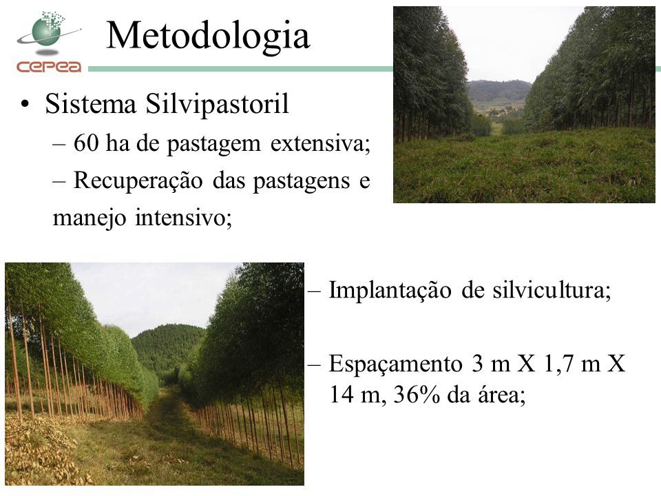 Metodologia Sistema Silvipastoril 60 ha de pastagem extensiva;