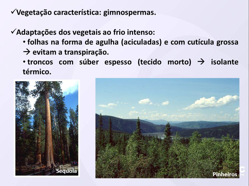 Vegetação característica: gimnospermas.