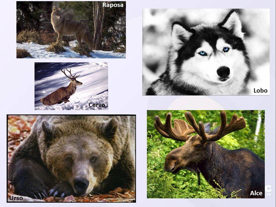 Raposa Lobo Cervo Alce Urso