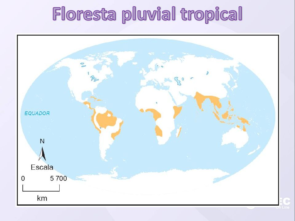 Floresta pluvial tropical