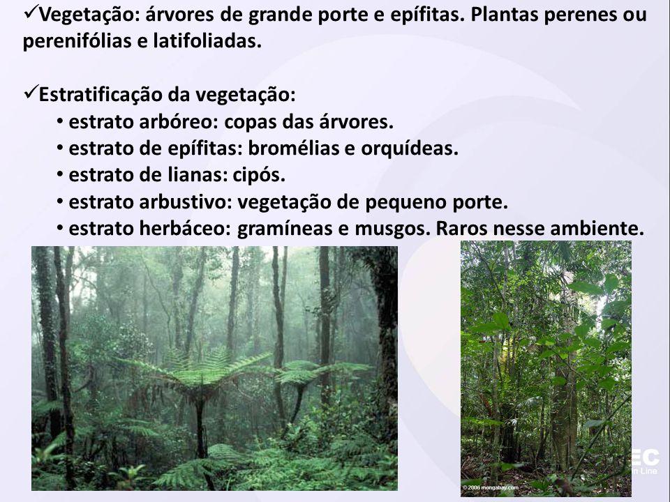 Vegetação: árvores de grande porte e epífitas