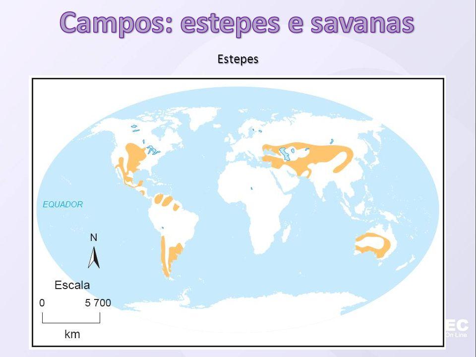 Campos: estepes e savanas