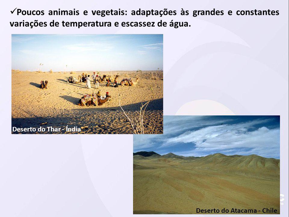 Poucos animais e vegetais: adaptações às grandes e constantes variações de temperatura e escassez de água.