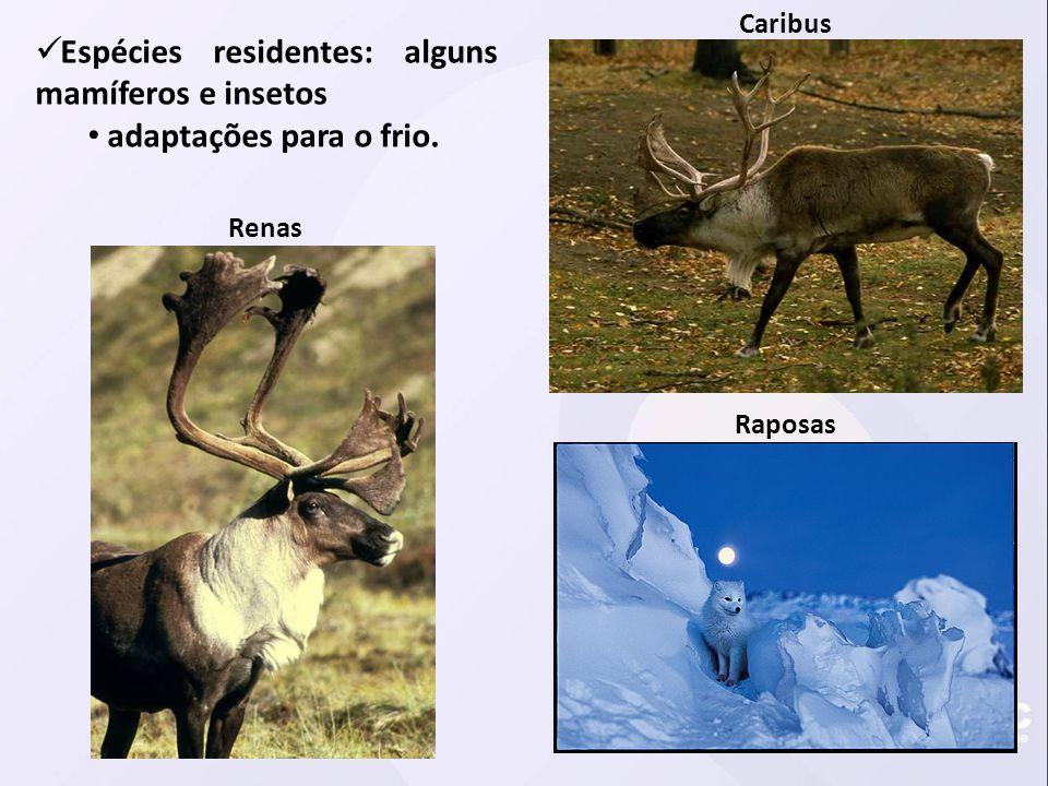 Espécies residentes: alguns mamíferos e insetos