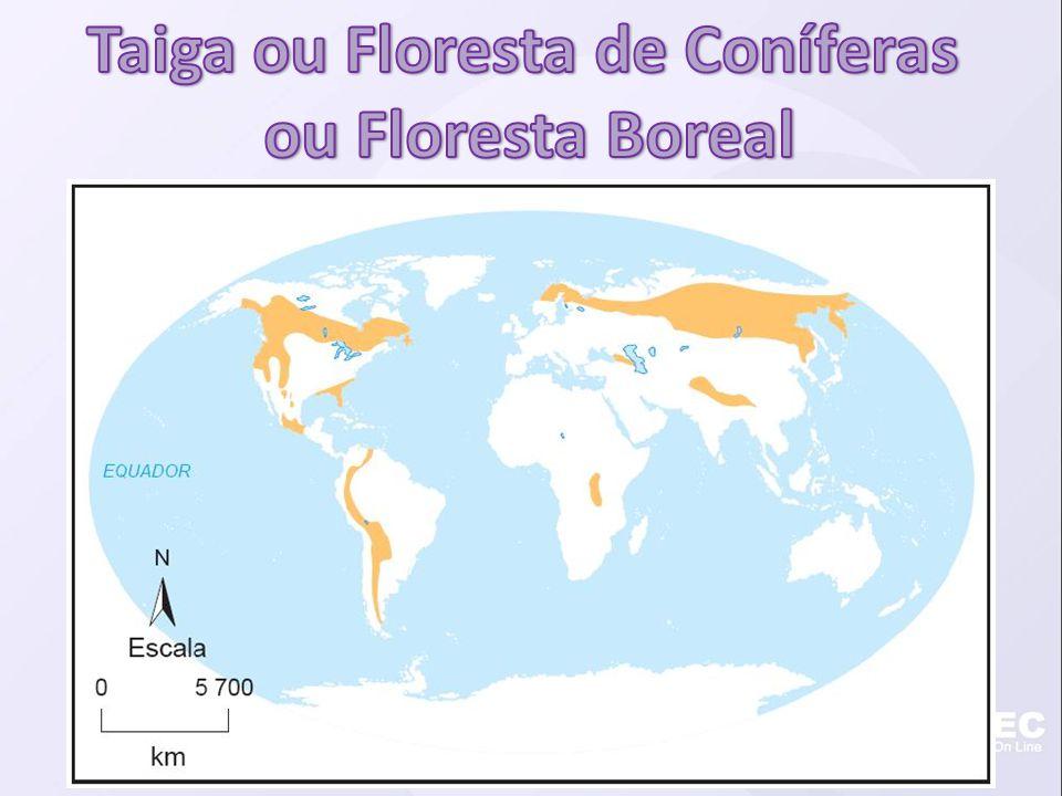 Taiga ou Floresta de Coníferas