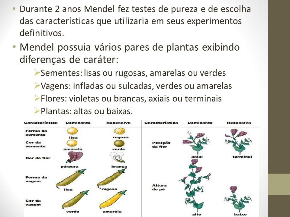 Mendel possuia vários pares de plantas exibindo diferenças de caráter: