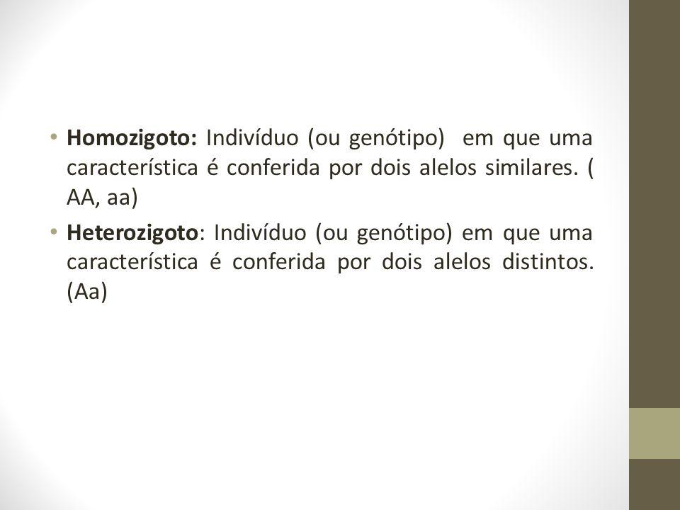 Homozigoto: Indivíduo (ou genótipo) em que uma característica é conferida por dois alelos similares. ( AA, aa)