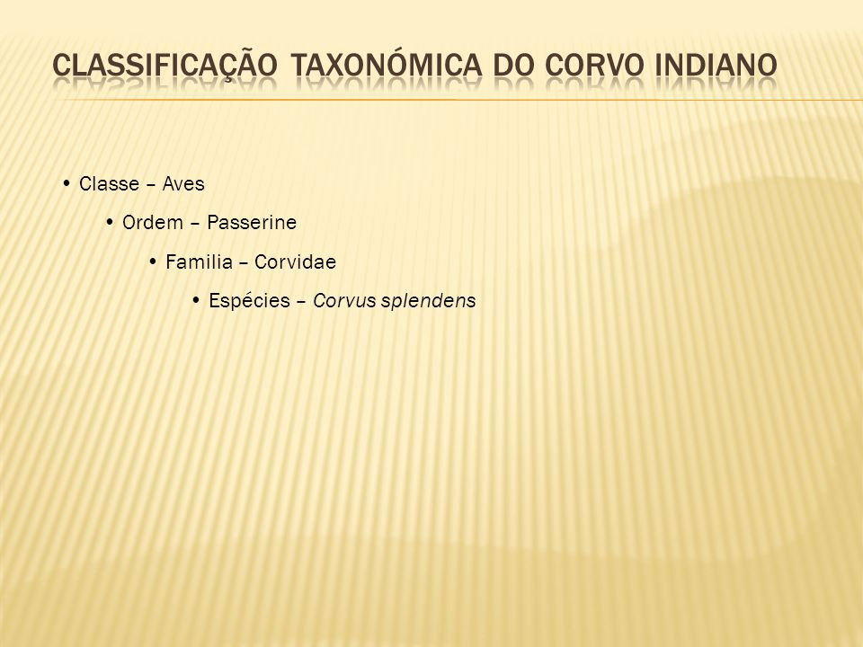 CLASSIFICAÇÃO TAXONÓMICA DO CORVO INDIANO