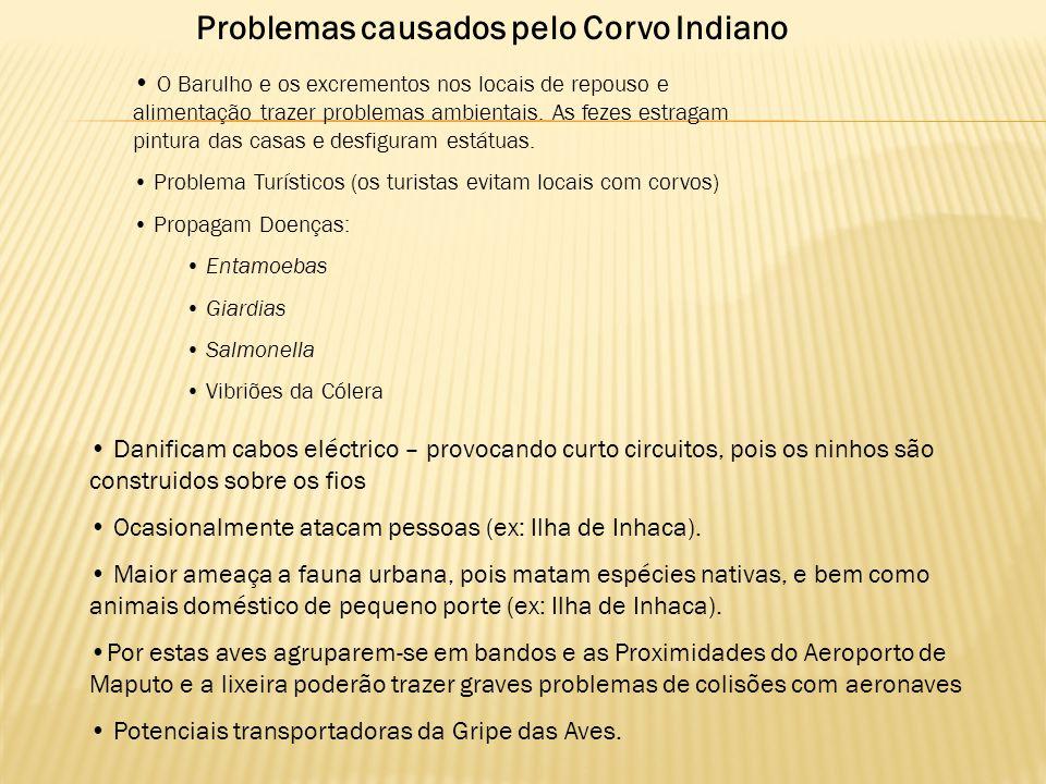 Problemas causados pelo Corvo Indiano